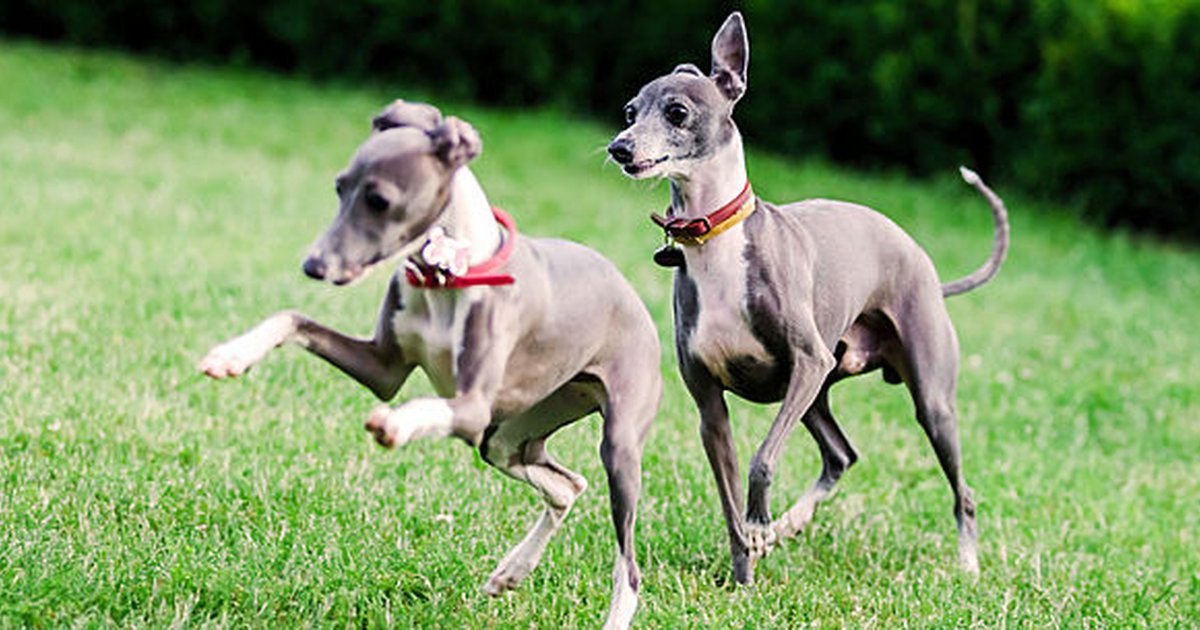 10 Of The Fastest Dog Breeds - Care com