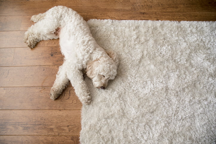 Dog Losing Hair? The Possible Causes And What To Do Next - Care com