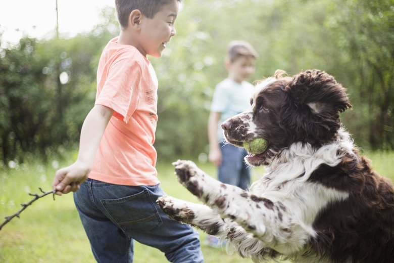 From English springers to Brittanys, Boykins to cockers, Jamie Knowles, the founder of pet carrier Roverlund is a big fan of spaniels overall.