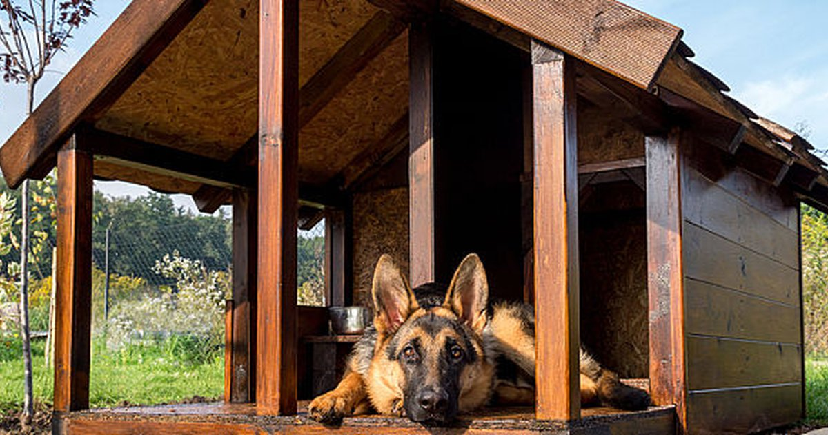 20 Of The Best Free Diy Dog House Plans On Internet Care