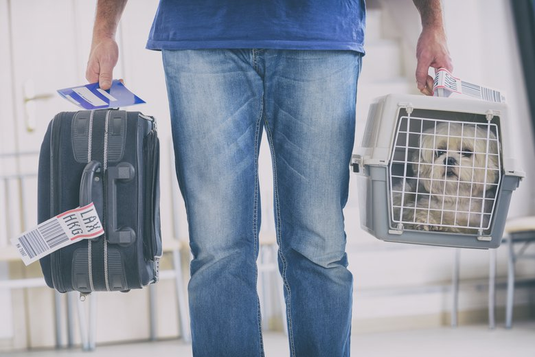 Flying with dogs 101: General rules, cost and travel tips