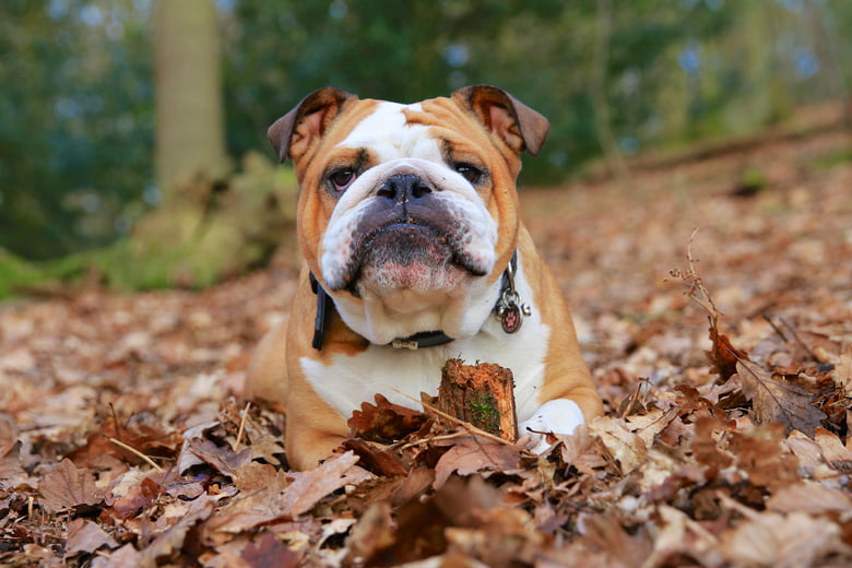 10 Medium Sized Dog Breeds That Are Great For Families