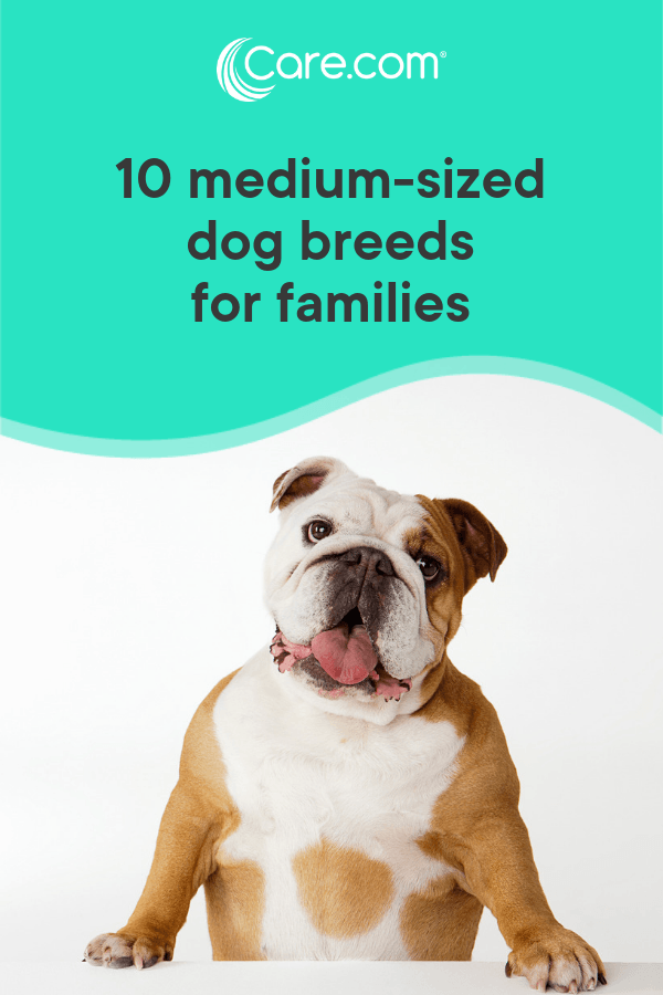 10 Medium-Sized Dog Breeds That Are Great For Families - Care com