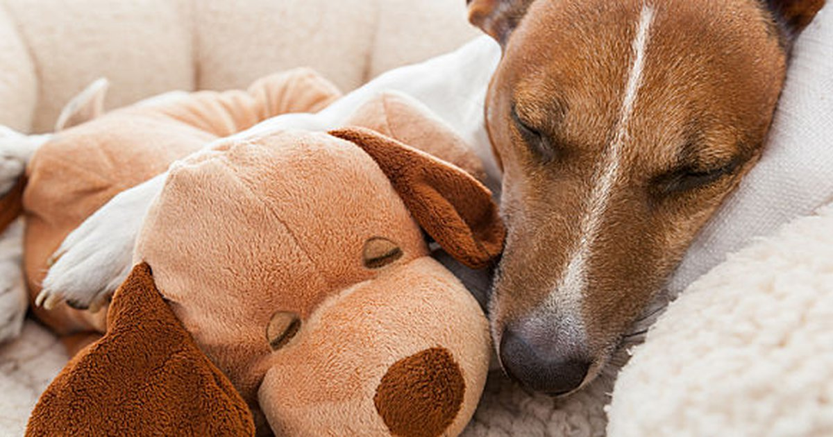 Dog Vomiting Bile: A Diet Plan For Getting Your Dog Back To Normal -  Care.com