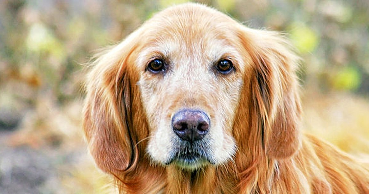 The Warning Signs Liver Cancer In Dogs