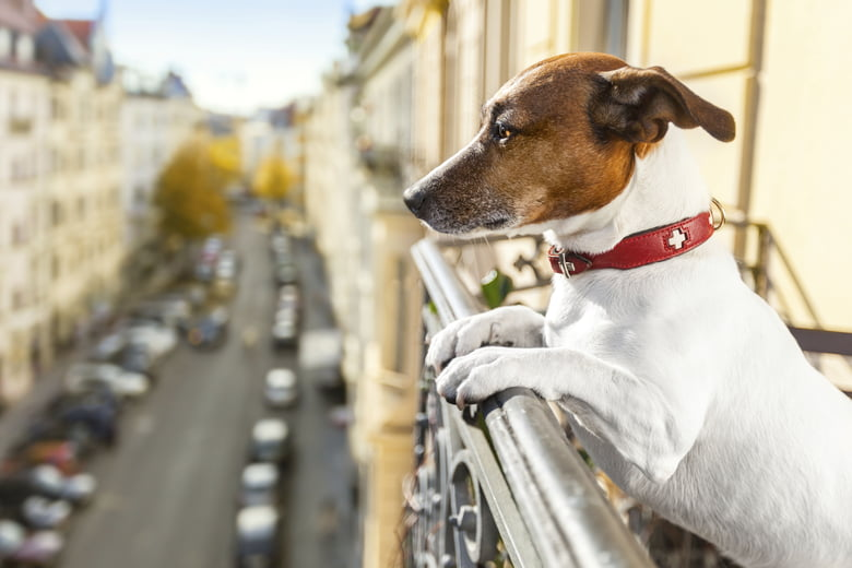 How To Ease Your Dog's Fear Of Loud Noises - Care com