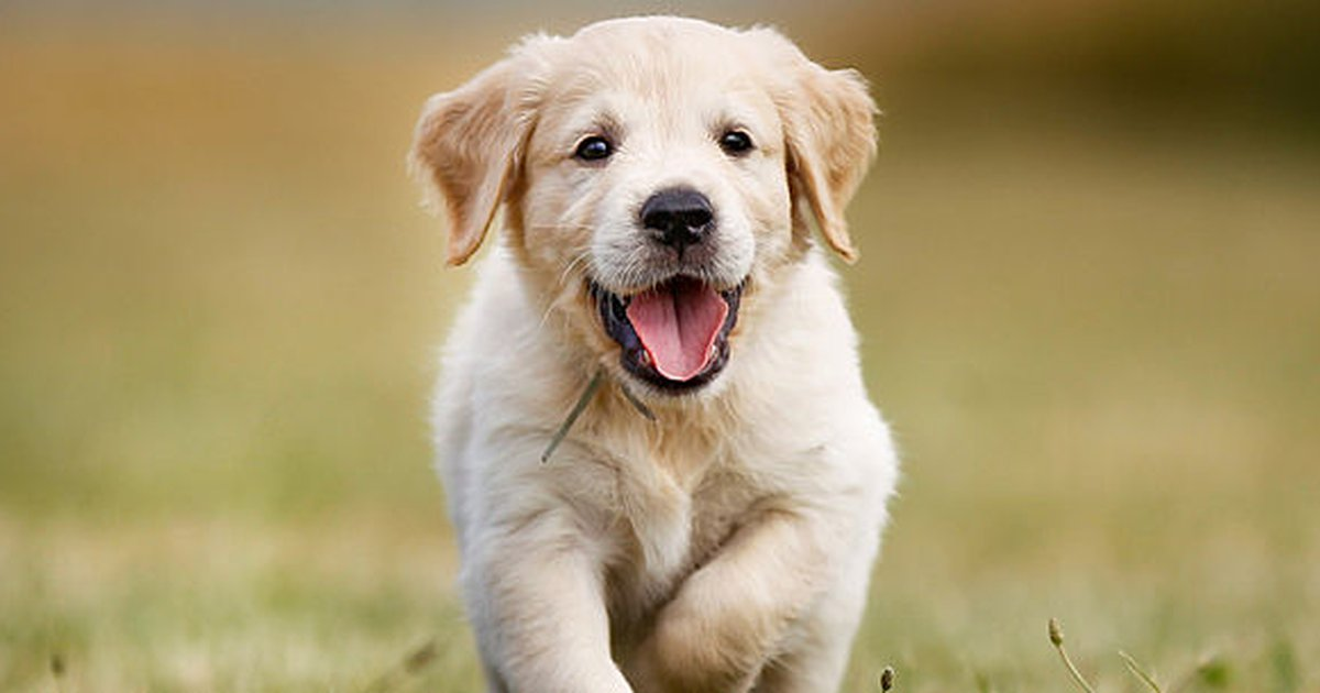 From Puppy Teeth To Adult Teeth: All About The Process