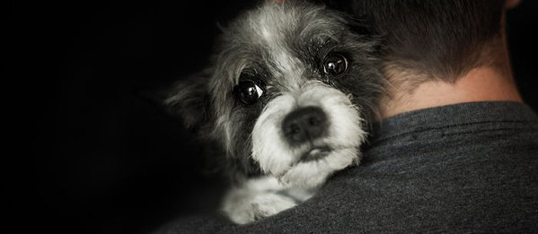Image result for Helping Your Dog