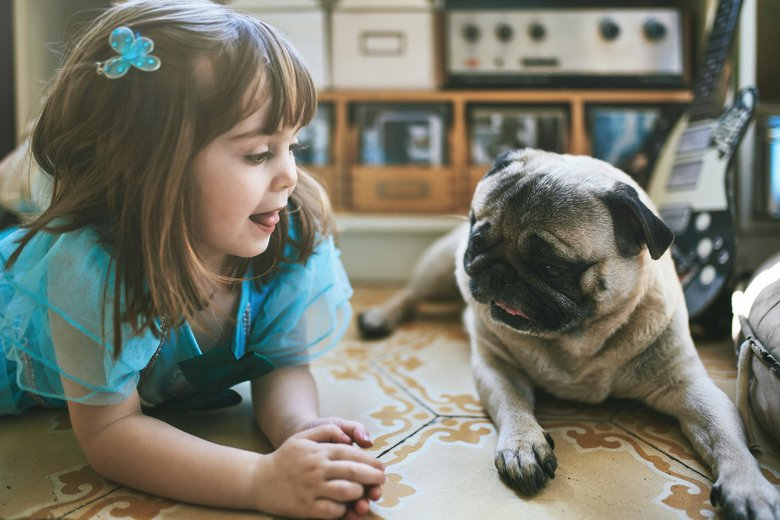 With a short-hair coat and big eyes, pugs are among the most easy-going and adaptable of the small breeds, says Demling.