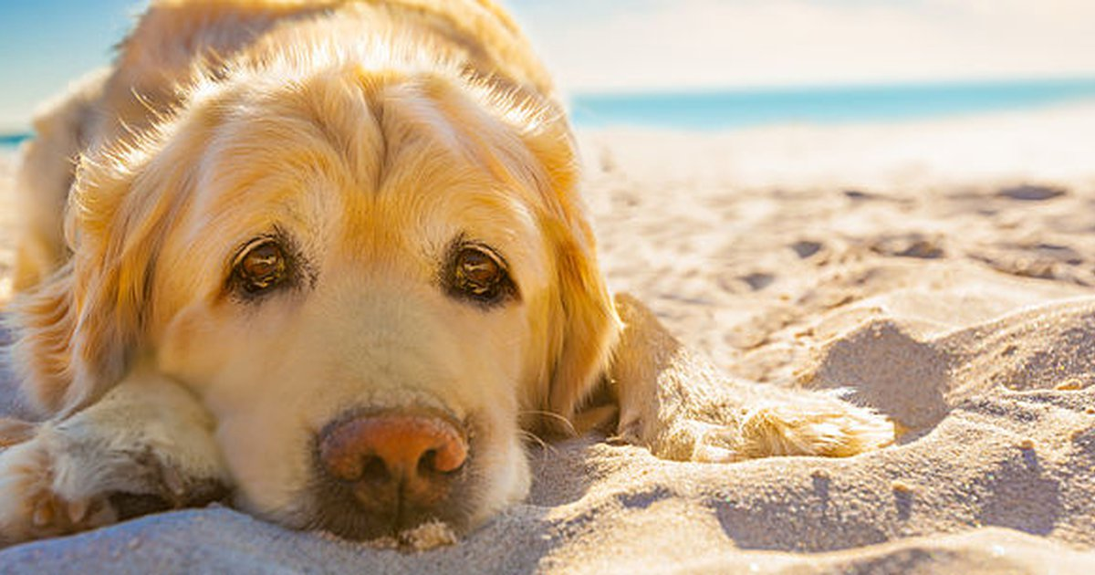 Dog Skin Cancer An Overview Of This Condition And How To Prevent It Care Com