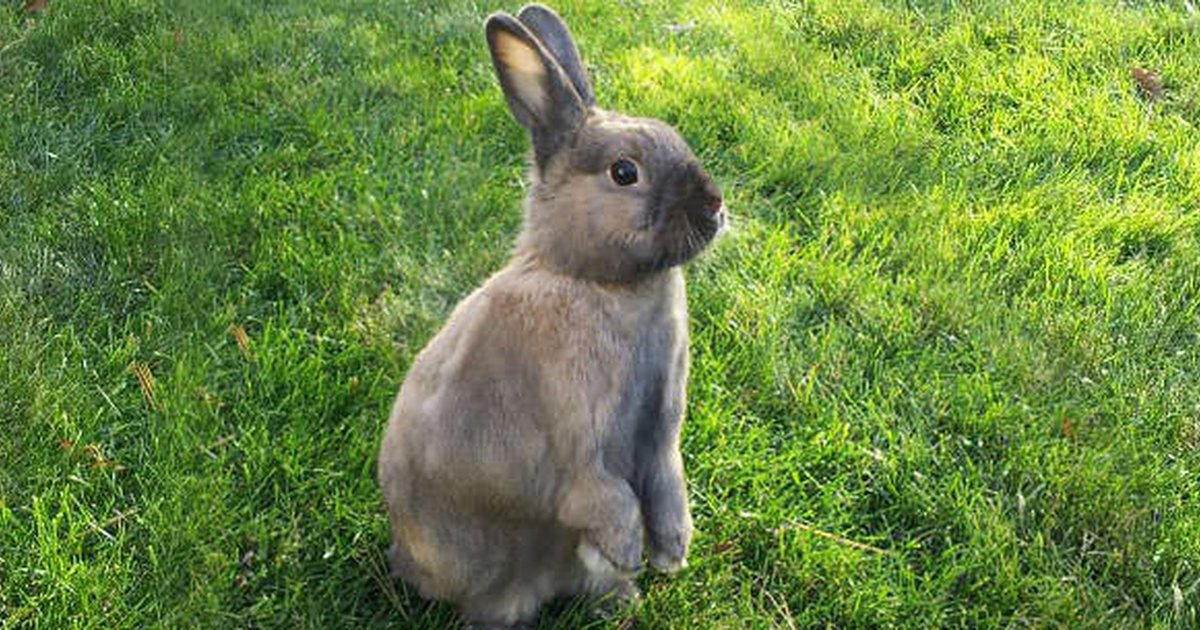 So You Want To Adopt A Rabbit Care