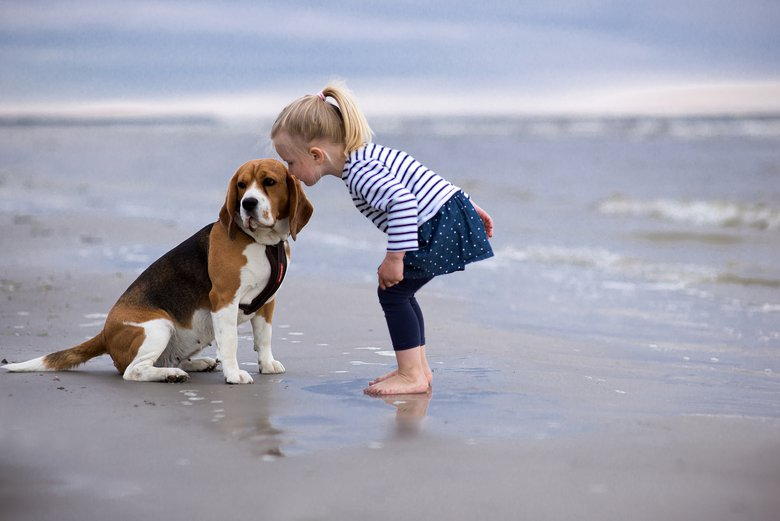 """Demling loves beagles — which are among the smallest of the hound dog breed — for kids, because they're """"gentle, affectionate and love to entertain the members of their pack."""""""