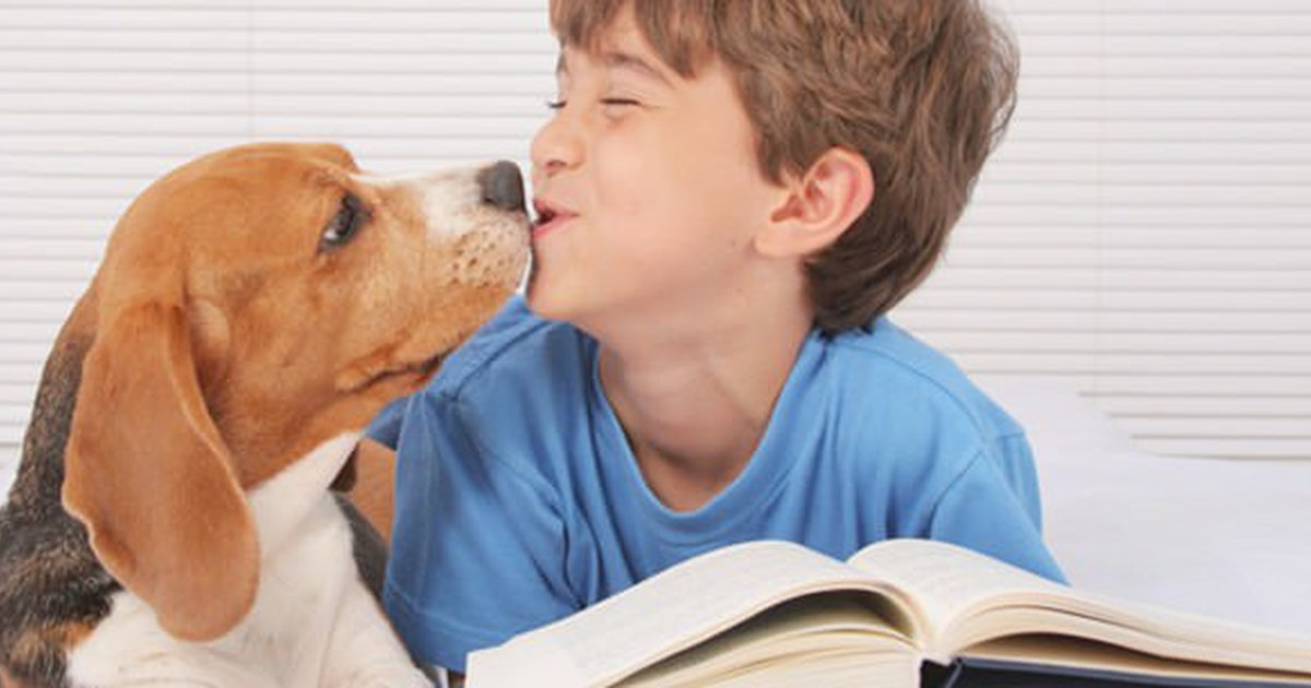 How Your Dog Can Help With School - Care com