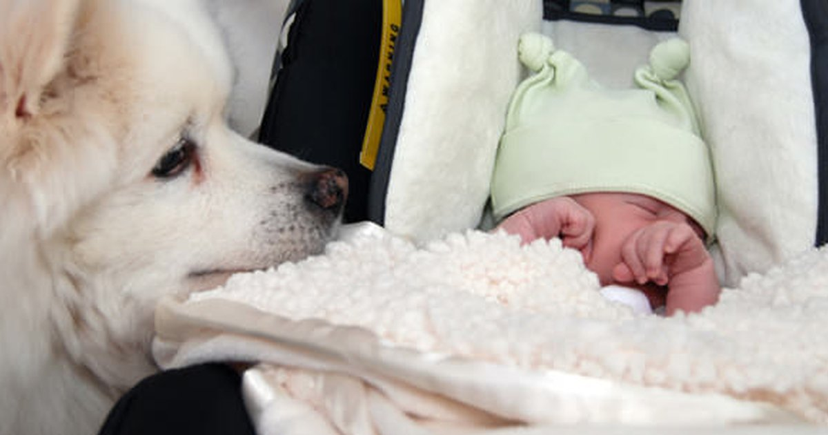 helping your four-legged and two-legged kids bond