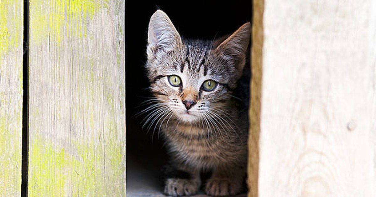 lost cat search 12 things you may forget to do care com rh care com