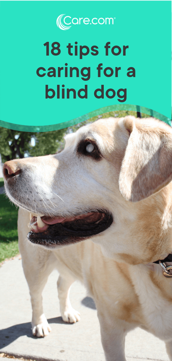 dog proof blinds space suit read next diy dog toys 18 helpful tips for caring blind dog carecom