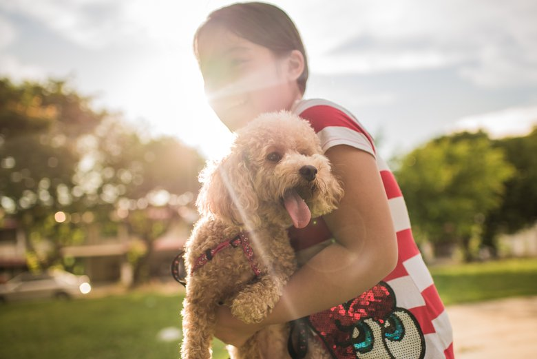 """""""It's hard to resist the many outstanding attributes of the poodle — cute, tightly curled coat and hypoallergenic skin,"""" says Carlson. """"Poodles come in several sizes but their keen intelligence is a hallmark of the breed."""