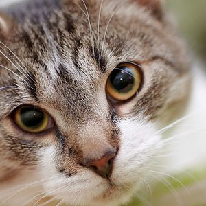 Care For Cat Ear Mites Signs Symptoms And Treatment