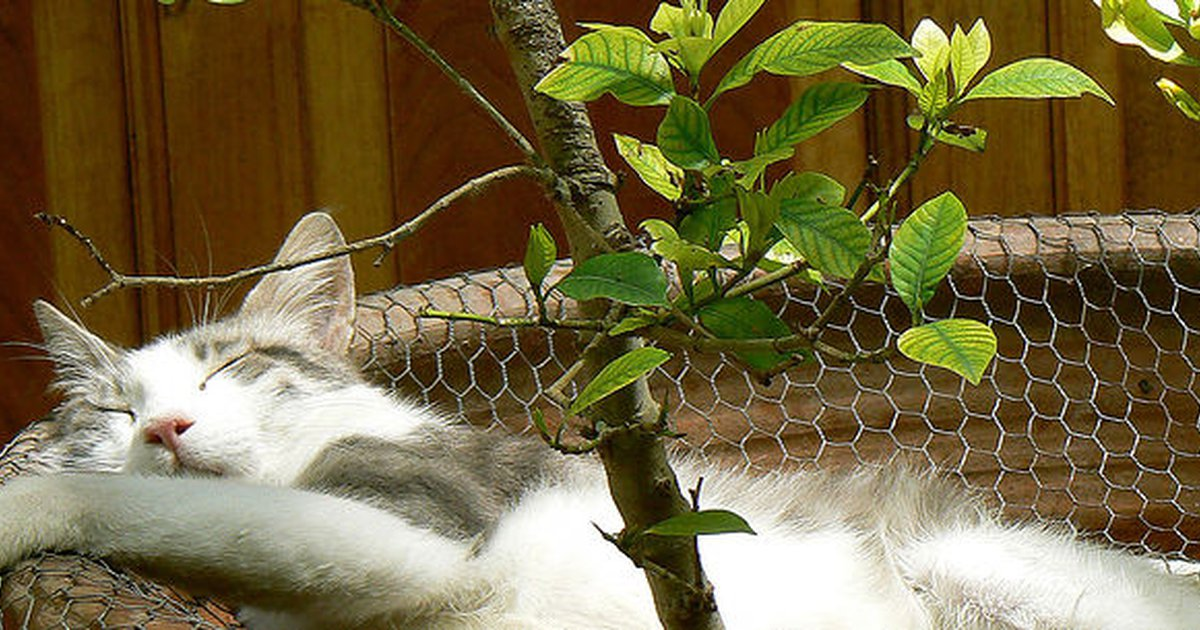 25 plants poisonous to cats and 25 safe plant suggestions carecom - Are Christmas Cactus Poisonous To Cats