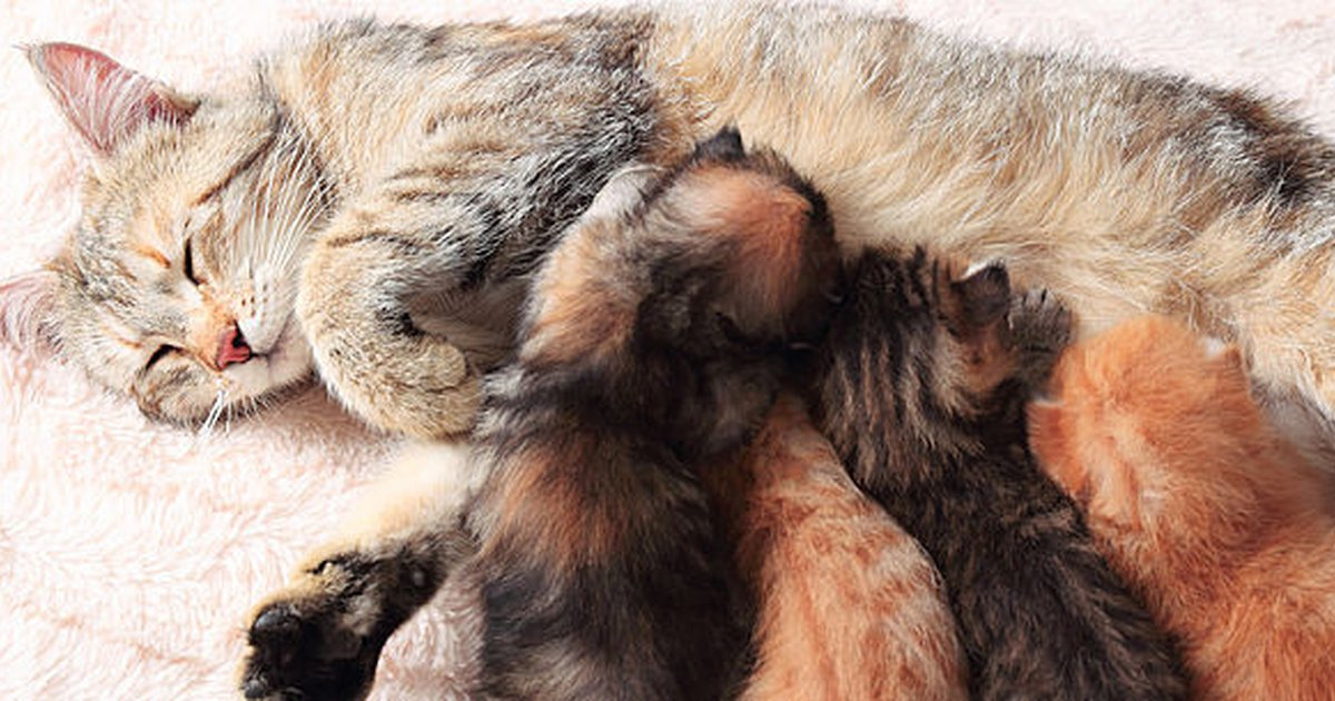 How are birth in cats: Necessary help