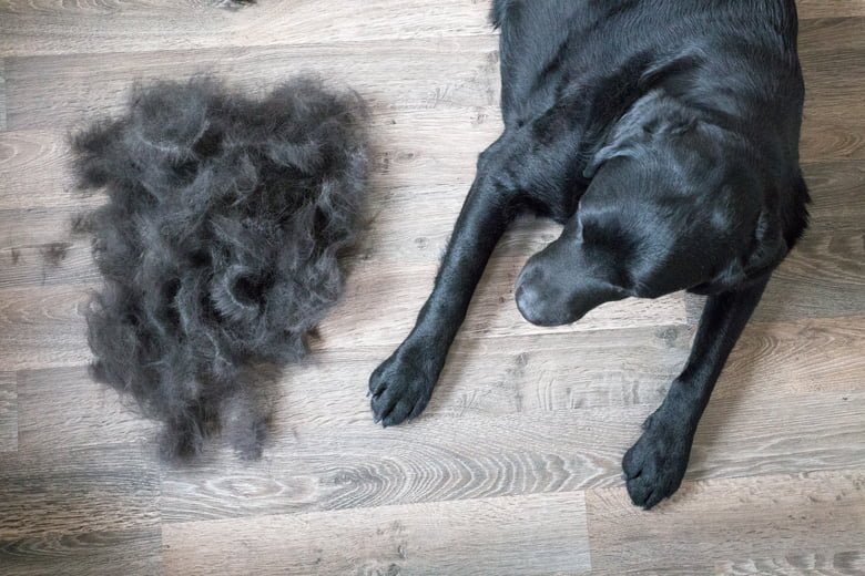 Bald spots on dogs: How vets say to treat them - Care.com