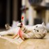 20 fun and easy DIY cat toys that kitties can't resist