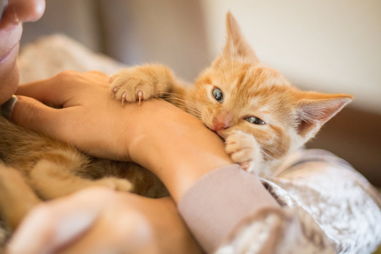 Cat Love Bites: A Unique Form Of Communication - Care.com