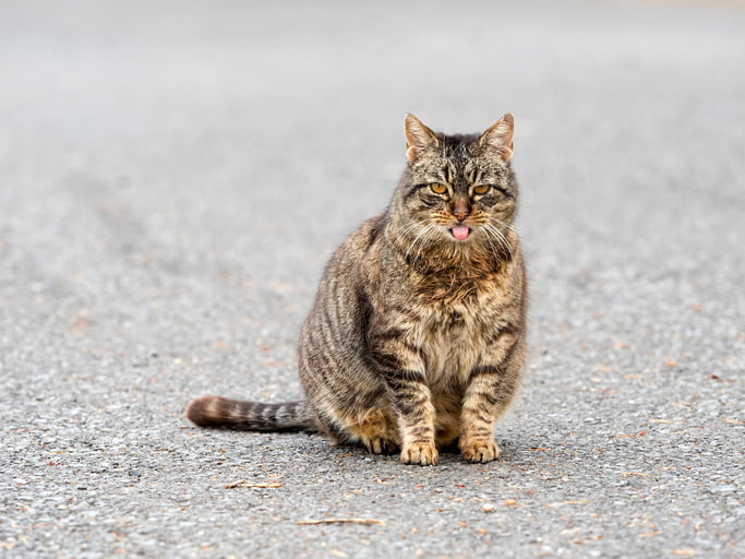 your indoor cat slips outside and now you re wondering if she s expecting kittens if she isn t fixed just one single encounter can result in