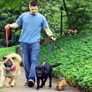 10 Ways To Become A Successful Dog Walker Care Com