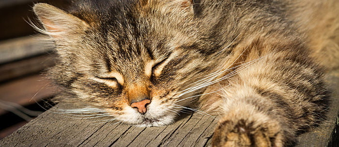6 Remedies For Cat Constipation - Care com