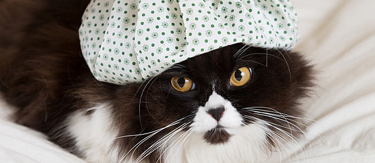 Cat Temperature: Normal Or Not So Much? How To Tell The