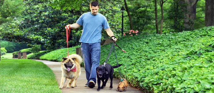 10 Ways To Become A Successful Dog Walker - Care.com