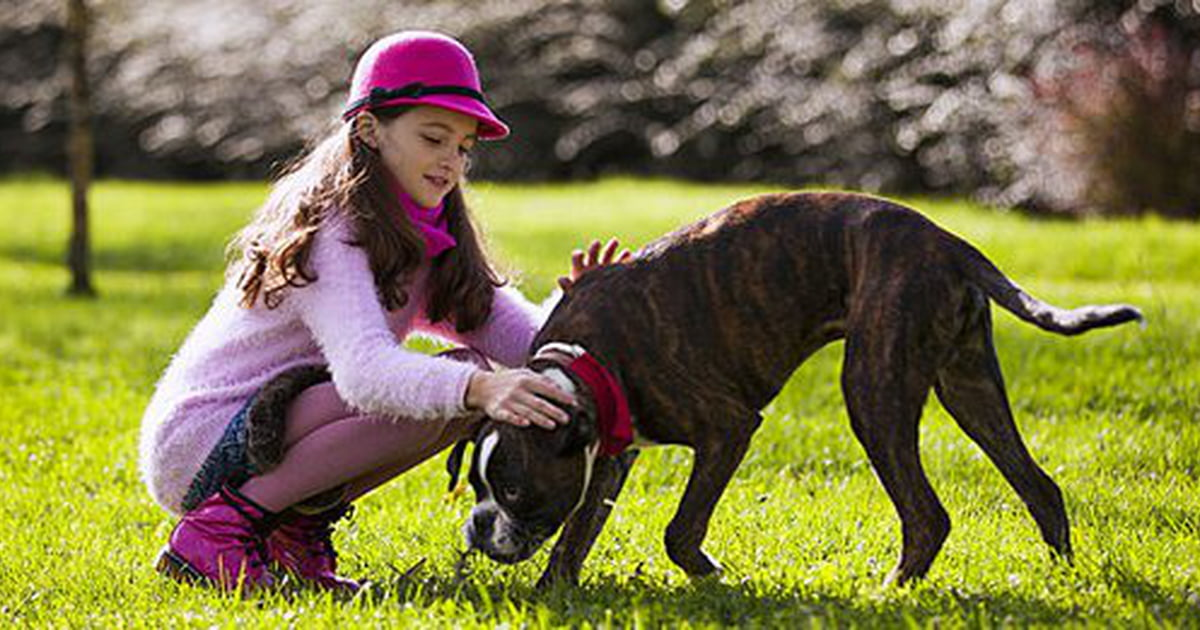 Best Natured Dogs For Families