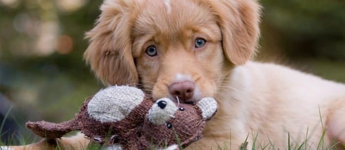 All The Information You Need To Know About Caring For Your Young Dog