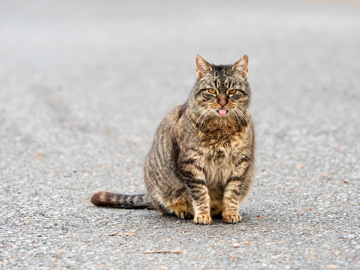 How To Tell If A Cat Is Pregnant: 5 Tell-Tale Signs - Care com