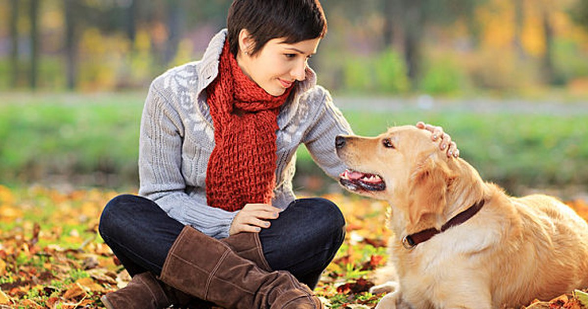 7 Signs Of Hypothyroidism In Dogs Care Com