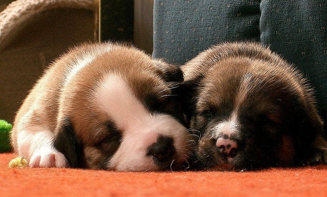 puppies grow to half their body weight in the first four to five months