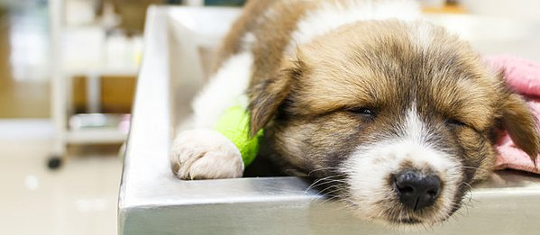 One Sick Puppy 7 Puppy Illnesses To Look For Care Com