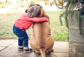 Best family guard dogs: 7 top breeds