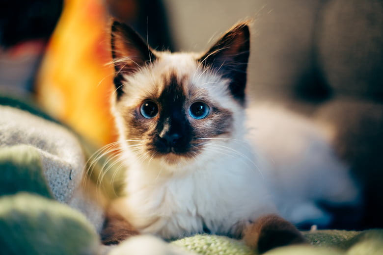 Surprising Cat Facts You Probably Didn't Know