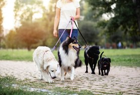 7 interview questions to ask a potential pet sitter