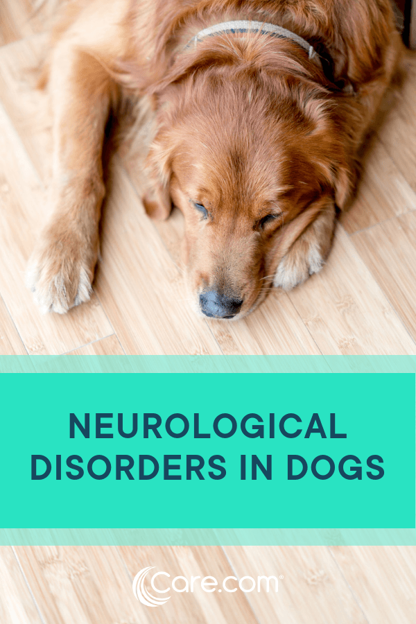 Neurological Disorders In Dogs: Signs, Diagnosis And