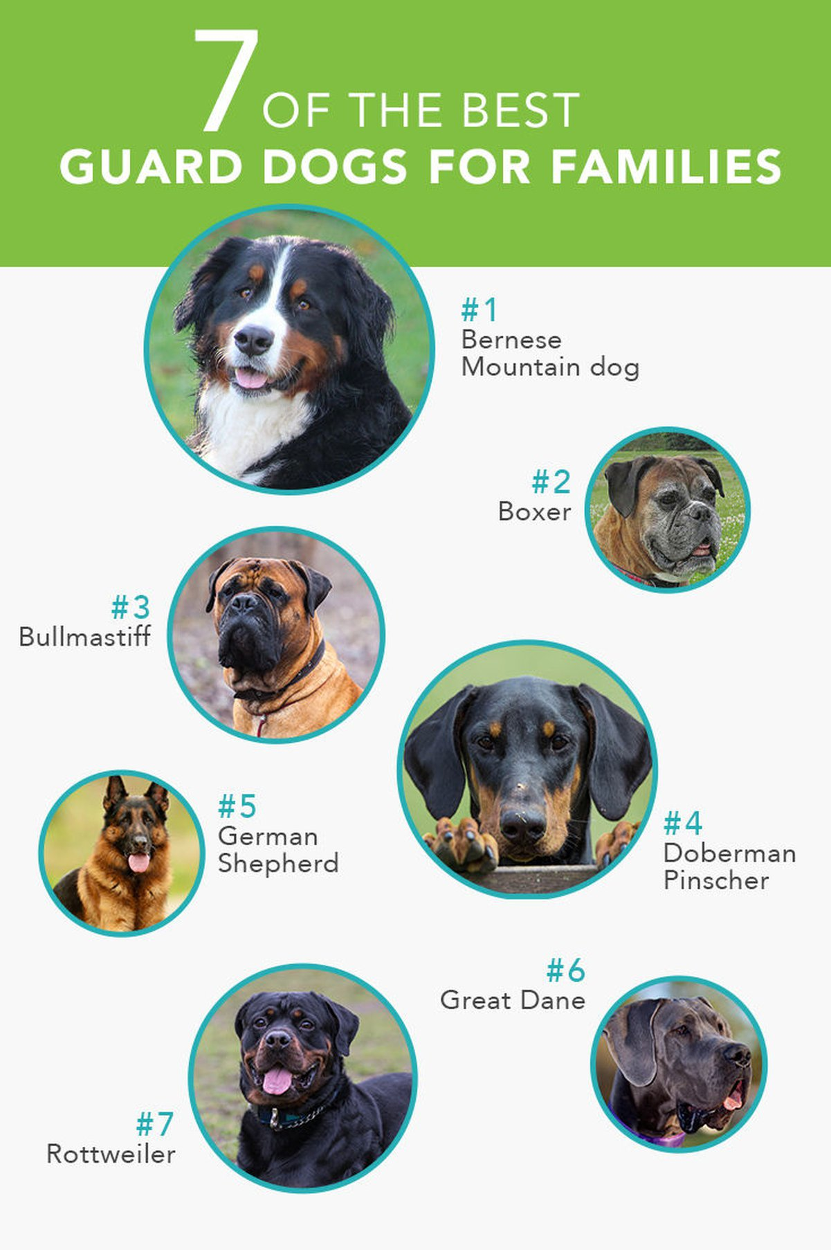 7 Of The Best Guard Dogs For Families