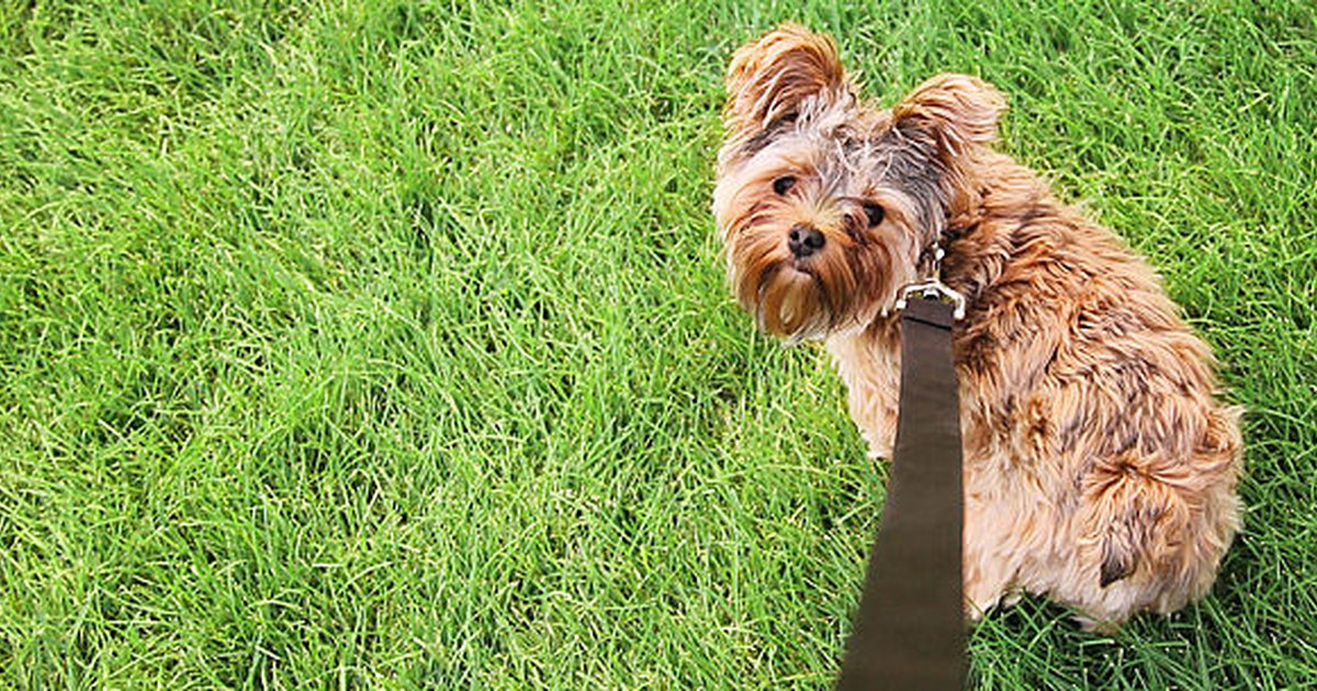 frequent urination in dogs how often should your dog pee care com rh care com