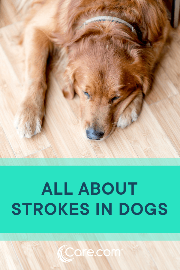 Strokes In Dogs: Everything You Need To Know About Symptoms, Causes