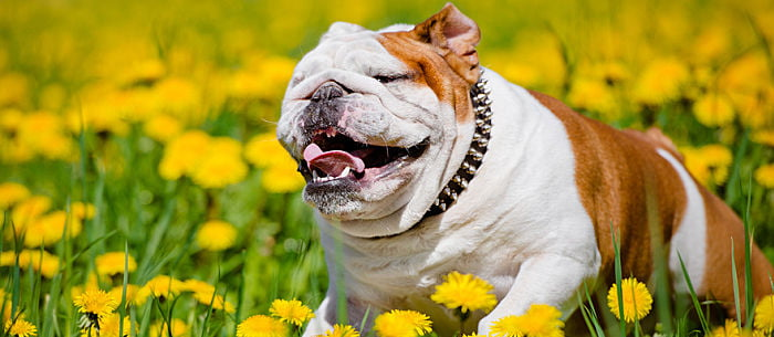 At-Home Dog Bee Sting Remedies That Work - Care com