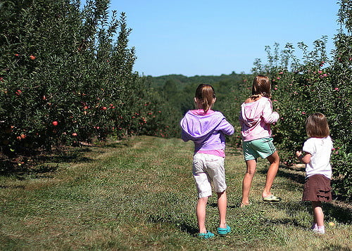 The 10 Best Places To Go Apple Picking Around Boston Care