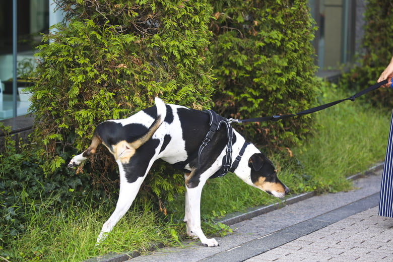 Blood In Dog Urine: What You Need To Know And Do - Care com