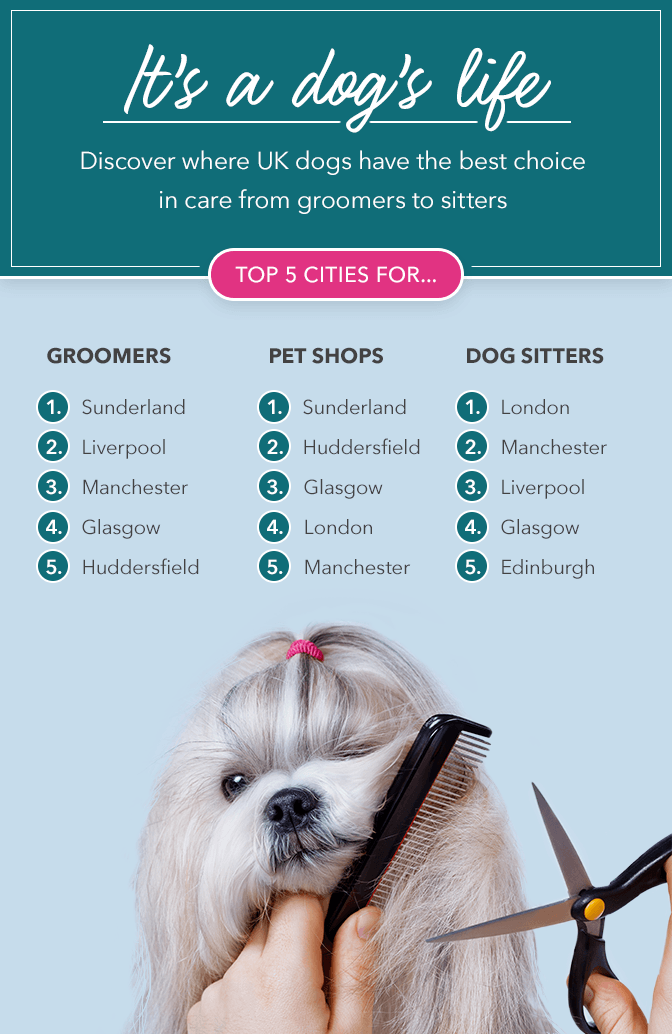 The Best Uk Cities For Pampered Pooches - Care.com