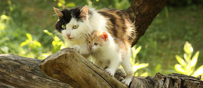 While litter box training happens fairly naturally ensure success by following these 4 steps. & How To Litter Box Train A Kitten - Care.com Community Aboutintivar.Com